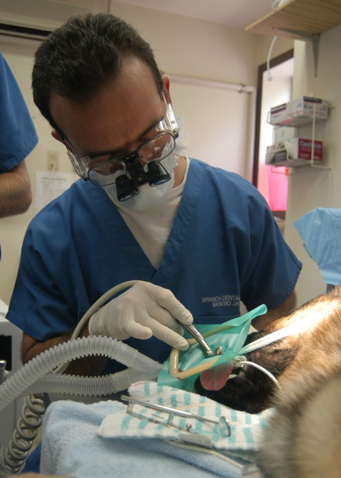 Aug. 5, 2005, U.S. Navy dentist  Lt Howard Polasky performs emergency root canal on a military working dog named Dollar