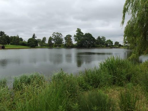 my syndicate lake