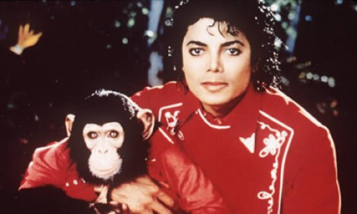 In 1985, a three-year-old chimpanzee named Bubbles was rescued from a Texas cancer research center by Michael Jackson. From that moment on, Bubbles went everywhere with Jackson, becoming his constant companion and purported best friend. He would even