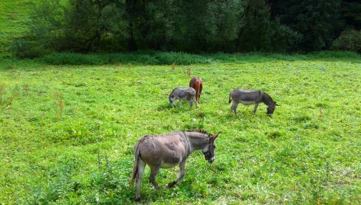 Four donkeys who have displeased the donkey queen.