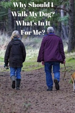 Why Should I Walk My Dog? What's in It for Me?