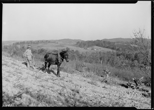 Boy plowing a potato field on an    Andersonville, Tennessee road  Oct. 1933.