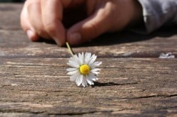 A Man and a Daisy: A Poem
