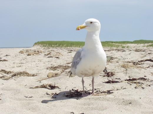 Chatham beach / E. A. Wright 2009