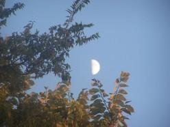 Georgia Moon