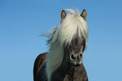 Magnificent Horses and Ponies