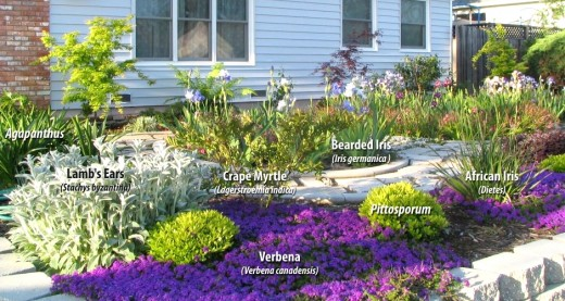 Some examples of drought tolerant plants in Southern California