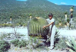 Cuddle with care!  Good sized barrel cactus in Mexico