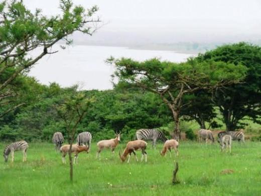Zeekogat, KwaZulu-Natal, South Africa