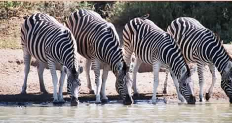 Nambiti Private Game Reserve, KwaZulu-Natal, South Africa