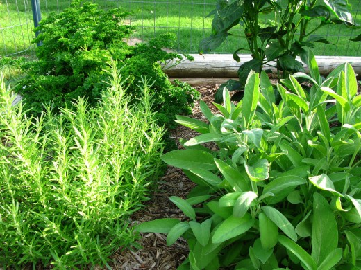 Growing your own herbs to use in your cooking and magick makes it that much more powerful.