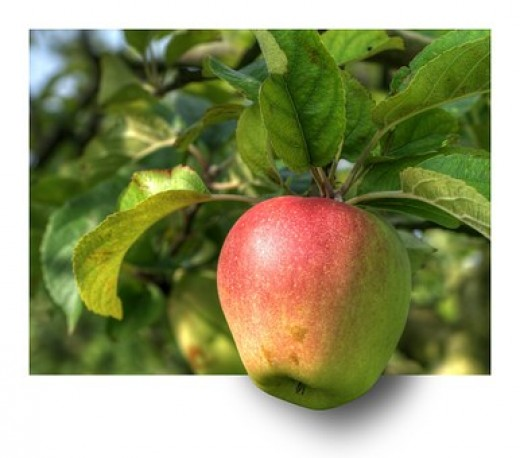 A lovely, fresh apple.