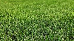 DIY: A Greener Lawn