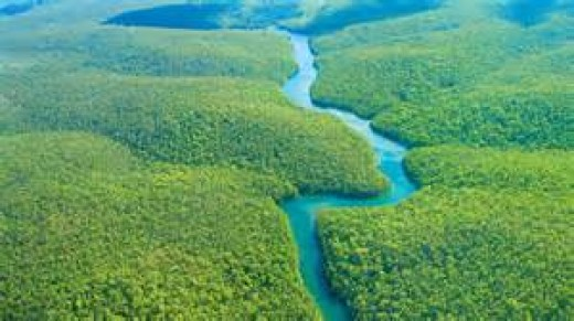 Animal agriculture is responsible for 91% of the Amazon Rainforest destruction!