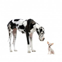 The 6 Biggest Breeds of Dogs