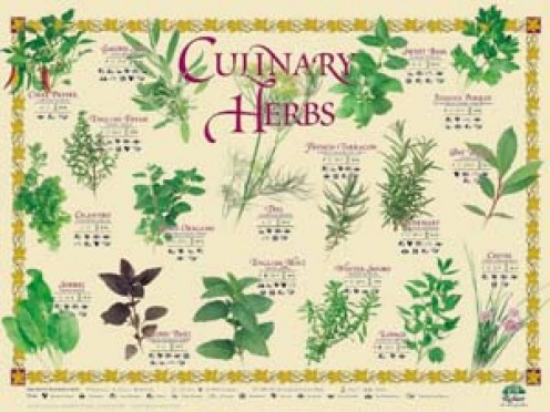 Five Essential Herbs in the Kitchen