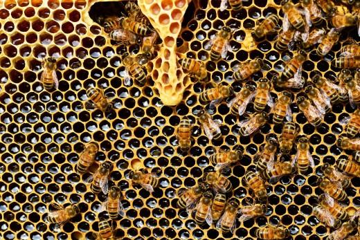 Beekeeping Essentials