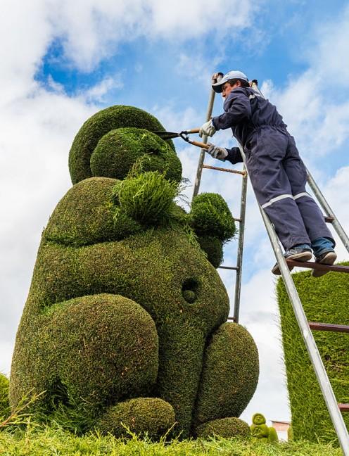 Gardener clipping topiary cypress in Tulcán, Ecuador.