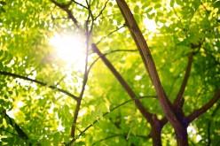 Espirit D'Arbre-Spirit of the Tree Poem