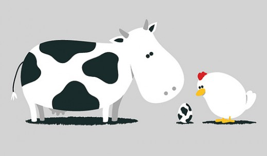 cow , a mammal laying eggs