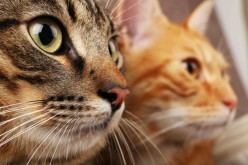 Feline Immunodeficiency Virus: The Facts