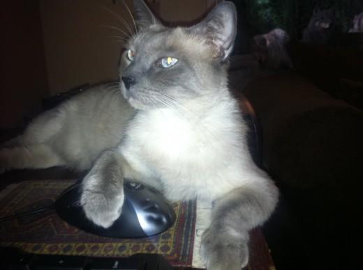 My cat, Terra.