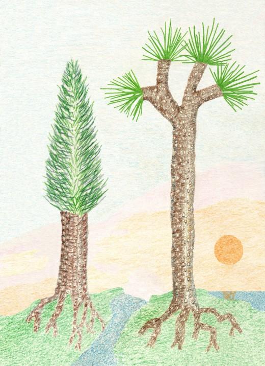 LYCOPOD TREES