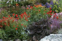 All Season Garden Color with Bold Foliage Effects, Masterful Contrasts