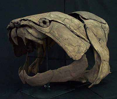 DUNKLEOSTEUS FOSSIL SCULL AND UPPER ARMORED PLATE