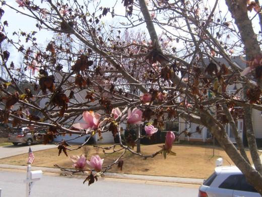 Clemson flowering