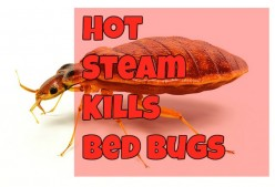 Does Hot Steam Kill Bed Bugs?