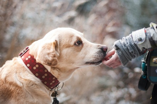 "Unlike Many Humans, Dog will Love You Without a ""Treat""."