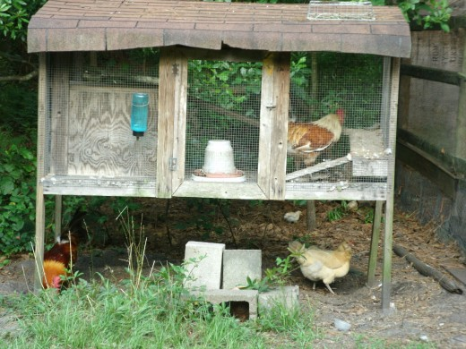 A small chicken coop fits well in a small backyard and the neighbors might not complain if you share fresh eggs with them!