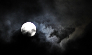 Owls hoot at harvest moon.