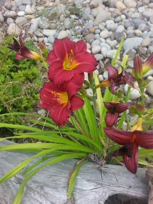 front garden friend