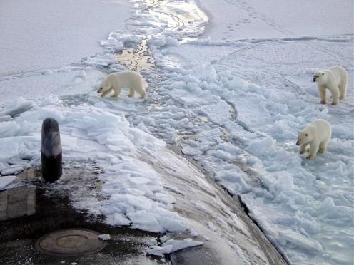 Polar bears on the sea ice of the Arctic Ocean, near the North Pole.