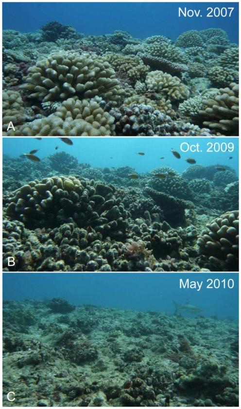 Progressive death of the ocean's coral.