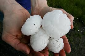 Large hailstones, collected in the aftermath of a severe thunderstorm...