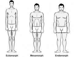 Ectomorph Bodybuilder Tips