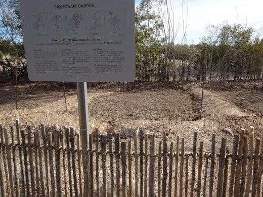Hohokam Garden