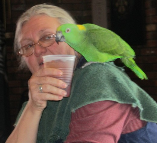 Parrot pauses for refreshments at Connecticut's Featherfest. - Photo by George Sommers