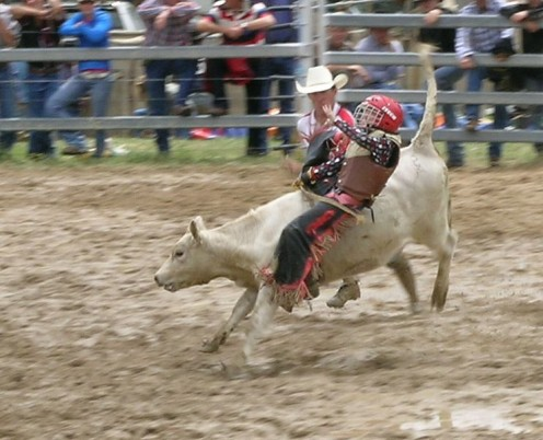 A rodeo clown assists a junior calf rider.