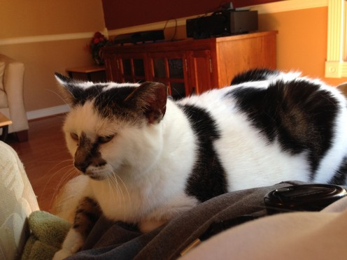 Cat Magnet: Managing a Feral Cat Colony