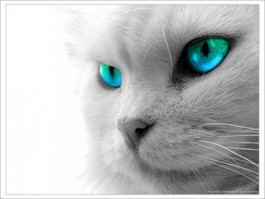 In a story about cats, a great name for this beauty could be Ice because of her blue eyes.