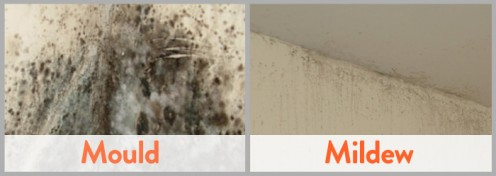 Differentiating between Mold and Mildew
