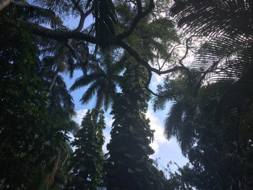 The tropical plants and trees in Florida have magical properties unlike other plants found in the U.S.