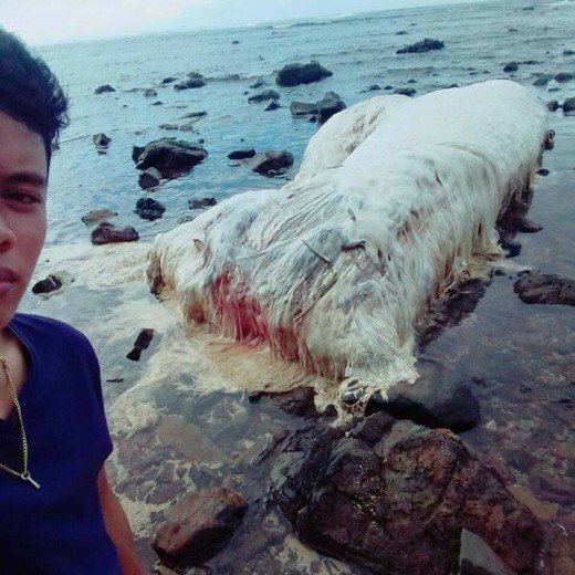 A bloodied strange sea creature was washed ashore on a beach in Dinagat Island, Surigao, Philippines on February 22, 2017 a week before the Surigao earthquake.