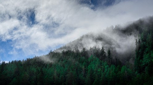 Singing viridian pine trees