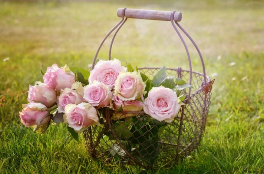 Pink Roses in a Wire Basket