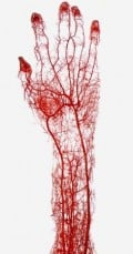 Structures & Functions of Organ Systems - Nervous, Skeletal, Endocrine, Cardiovascular,  and Circulatory Systems
